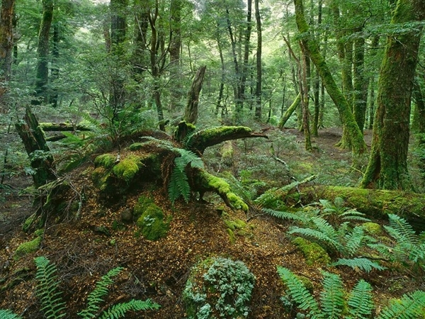 Rainforest Mt Field National Park Tasmania