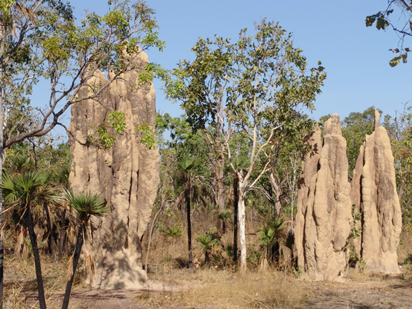 Magnetit termite mounds at Litchfield National Park