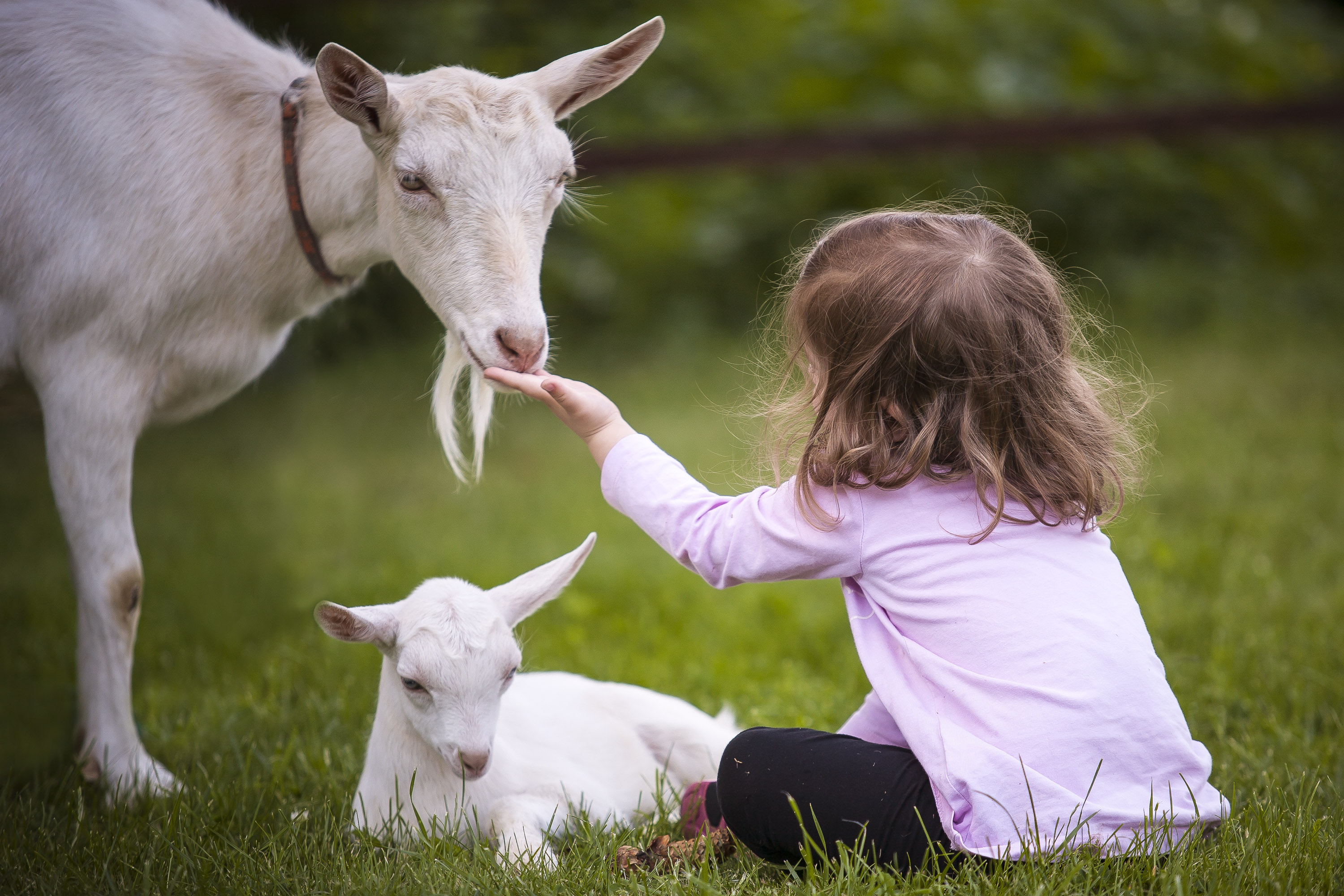 Young-Girl-Goats
